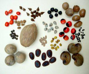 Tất cả các loại hạt có thể nảy mầm đều không được chấp nhận